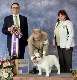 CH. CHEROKEE LEGEND PADDINGTON at Bulldog Club of Philadelphia Specialty Dog Show
