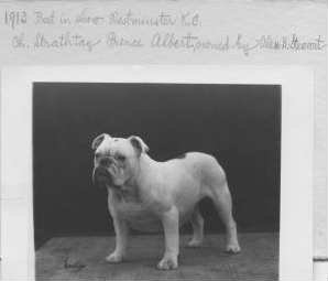 CH. STRATHWAY PRINCE ALBERT BEST IN SHOW at The WESTMINSTER KENNEL in 1913