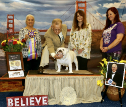GCH. CHEROKEE LEGEND WHITE PEARL Bulldog Club of America, Division III Specialty Best Of Breed