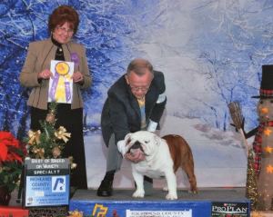 GCH. CHEROKEE LEGEND COWBOY Bulldog Club of Greater Cleveland Specialty Show Best of Breed