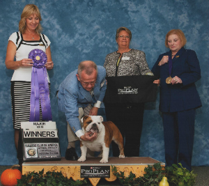 CHEROKEE LEGEND LIGHT MY FIRE Bulldog Club of America National Specialty Winners Bitch